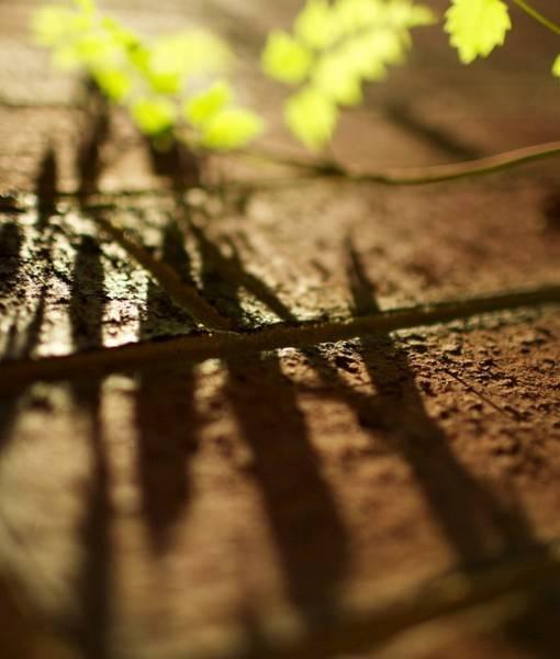Фотообои Падающая тень от ветки (ID 1454)