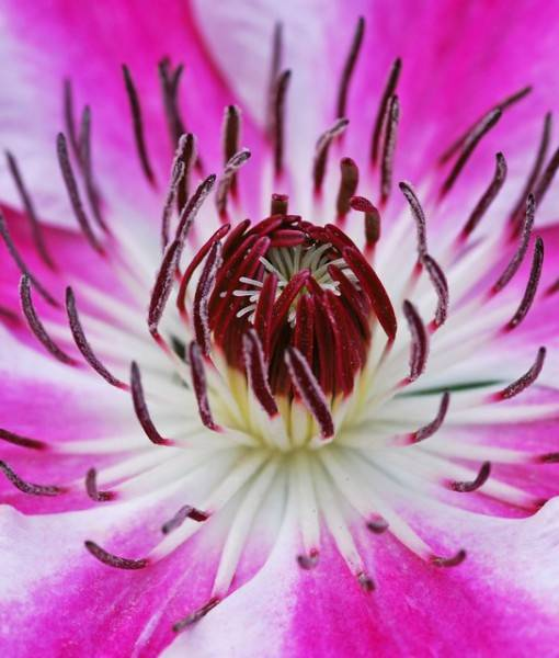 Фотообои Бутон цветка крупным планом (ID 1463)