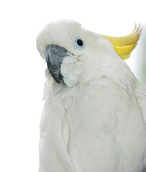 Фотообои Попугай (ID 1565)