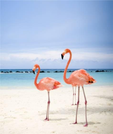 Фотообои Розовые фламинго (ID 343)