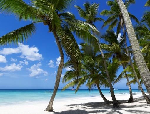 Фотообои Пальмы на белом песке (ID 3509)
