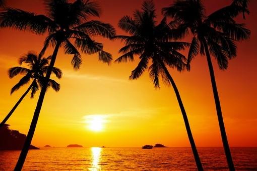 Фотообои Пальмы на фоне закатного солнца (ID 3515)