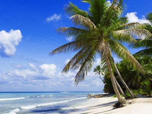 Фотообои Пальма на белом песке (ID 3518)