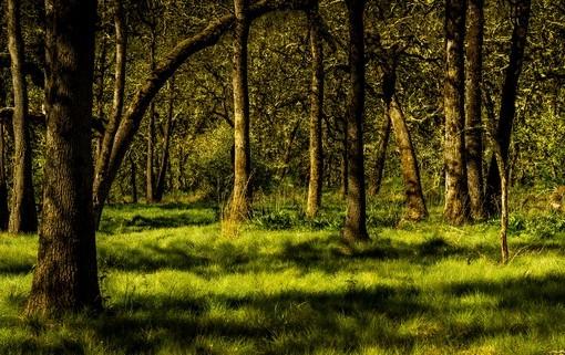 Фотообои Игра теней в лесу (ID 4091)
