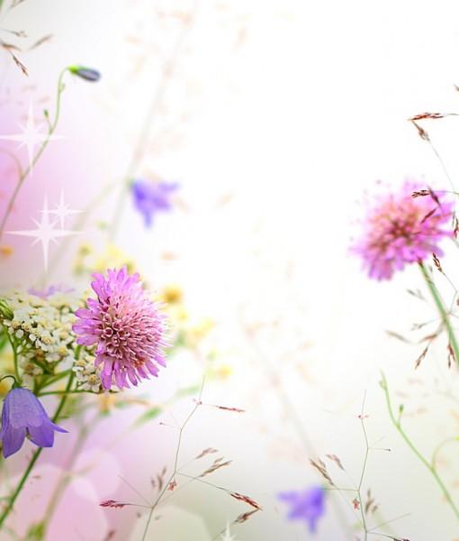 Фотообои Полевые цветы (ID 7113)