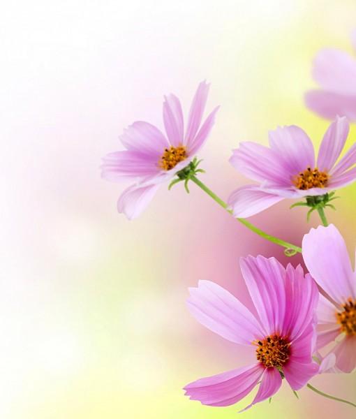 Фотообои Орнамент с розовыми цветами (ID 7115)