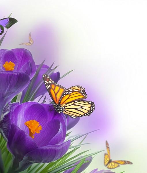 Фотообои Орнамент крокусы и бабочка (ID 7123)