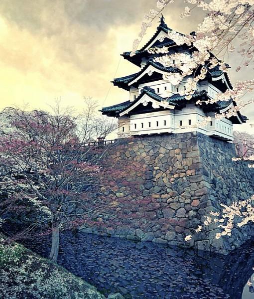 Фотообои Сакура на фоне восточного храма (ID 8222)