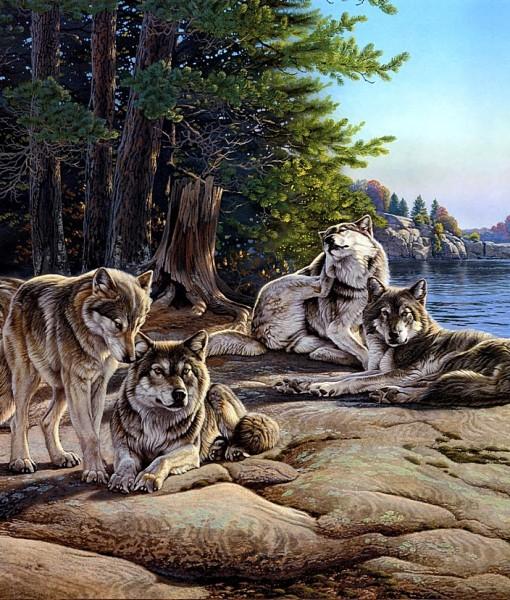 Фотообои Волки на берегу реки (ID 8223)