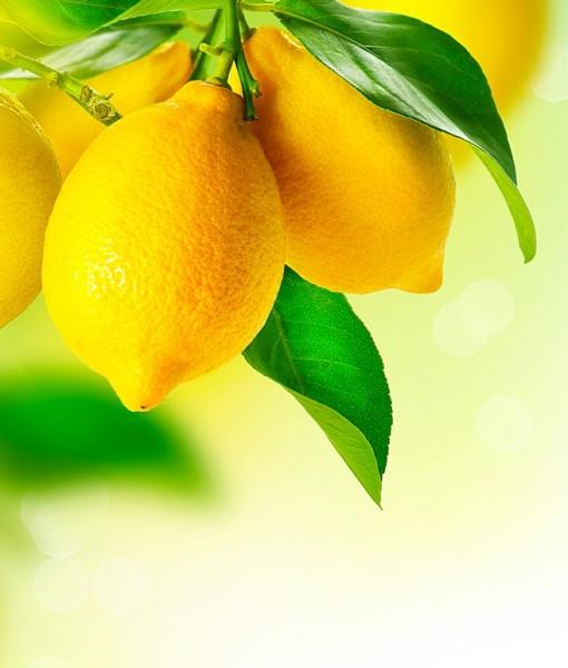 Фотообои Ветка лимона (ID 14224)