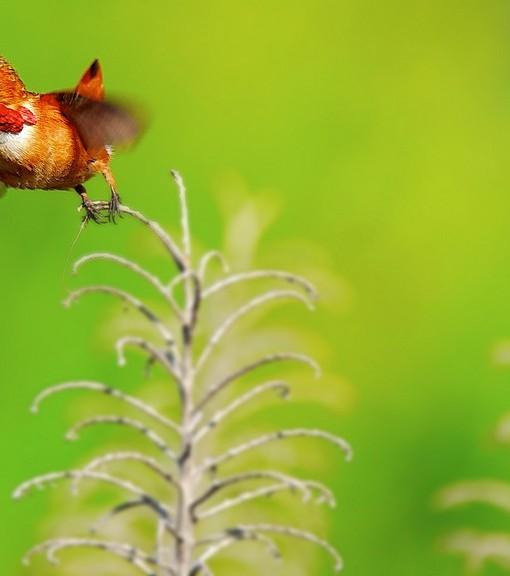 Фотообои Птица у цветка (ID 14509)