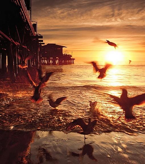 Фотообои Птицы на берегу (ID 14514)