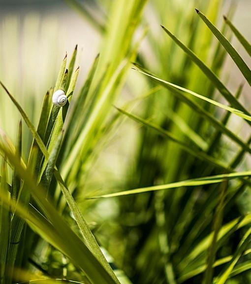 Фотообои Улитка в траве (ID 14517)