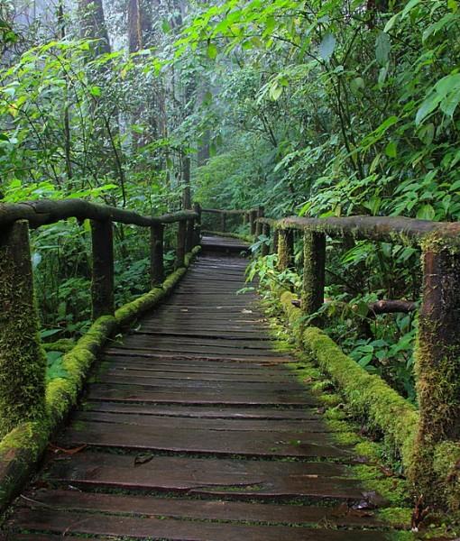 Фотообои Старый деревянный мост в лесу (ID 14610)