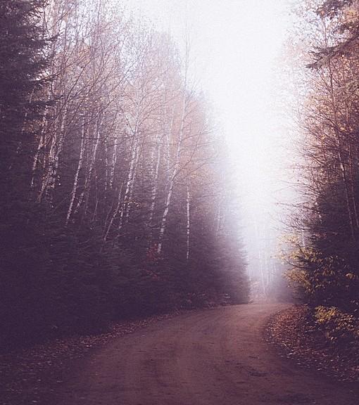 Фотообои Утренний туман на лесной дороге (ID 14816)