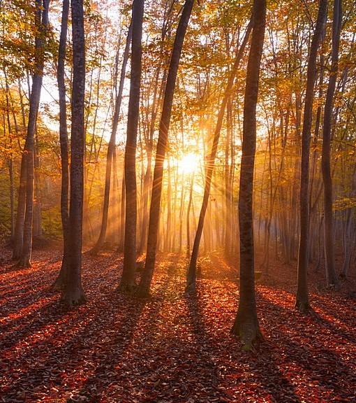 Фотообои В осеннем лесу (ID 14819)
