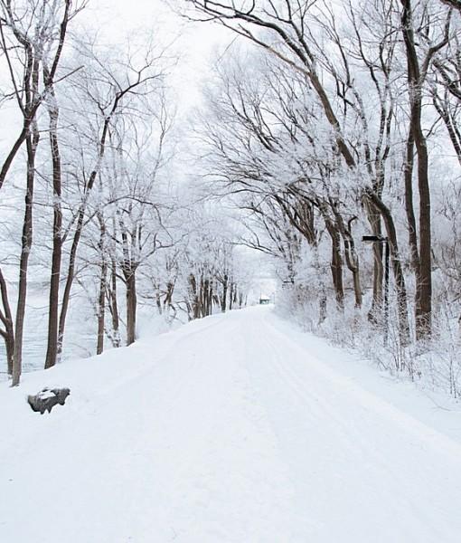 Фотообои Зимняя дорога (ID 14822)