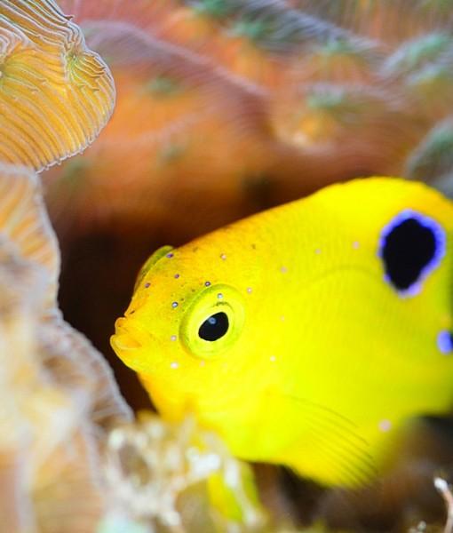 Фотообои Декоративная рыбка (ID 15109)