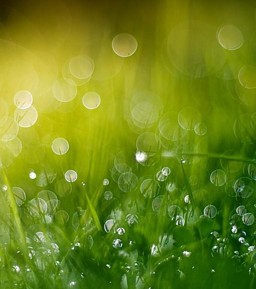 Фотообои Роса на траве (ID 15113)