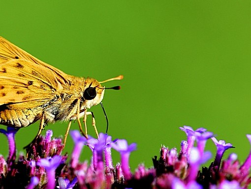Фотообои Бабочка на цветке (ID 15125)