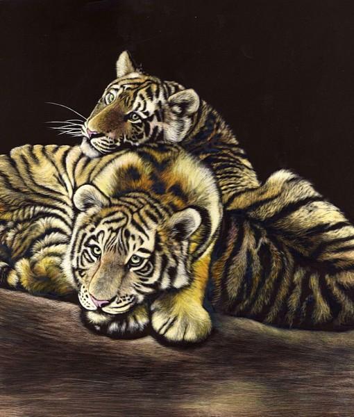 Фотообои Тигры. Гравюра (ID 8296)