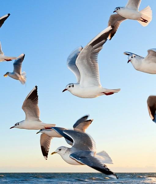Фотообои Чайки над водой (ID 8609)