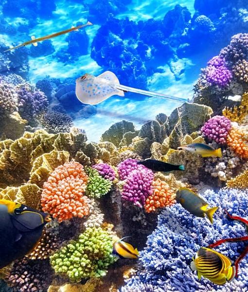 Фотообои Подводный мир (ID 8939)