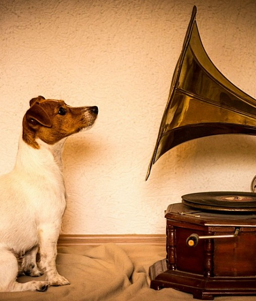 Фотообои Собака и граммафон (ID 9208)
