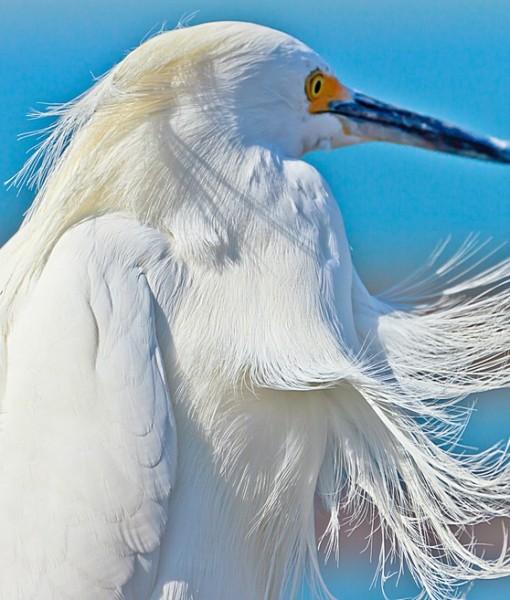 Фотообои Белые перья (ID 9210)