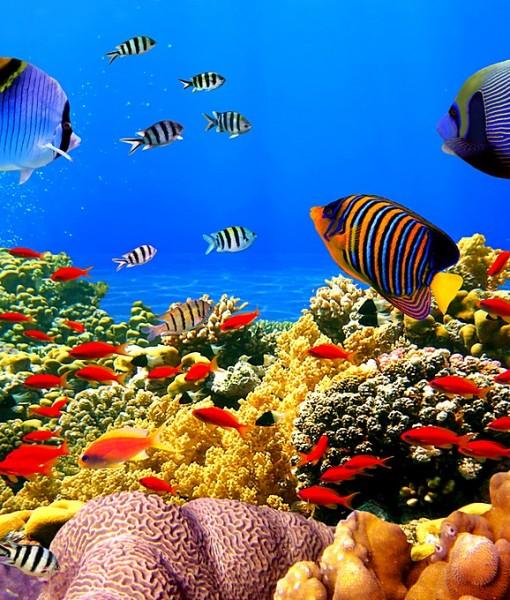 Фотообои Подводный мир (ID 9211)