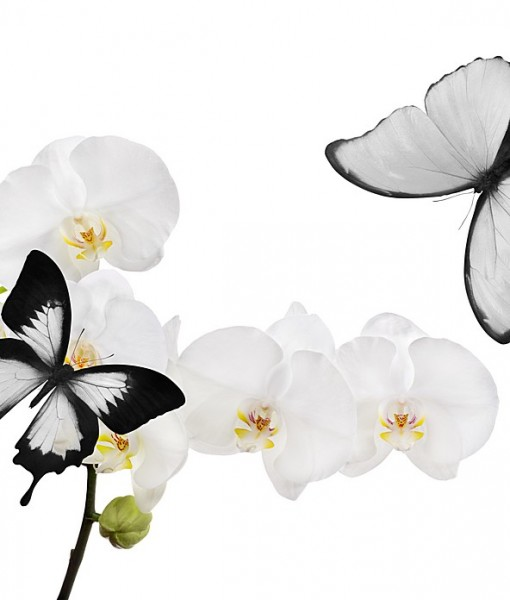 Фотообои Белые бабочки (ID 9214)