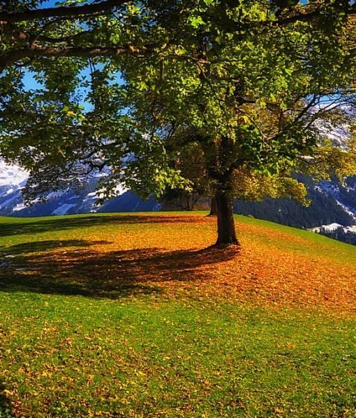 Фотообои Ранняя осень в горах (ID 15444)