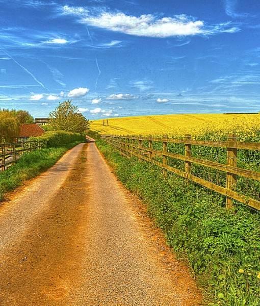 Фотообои Сельская дорога (ID 15461)