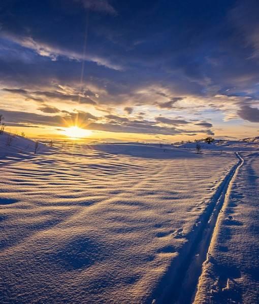 Фотообои Лыжня в зимнем поле (ID 15468)