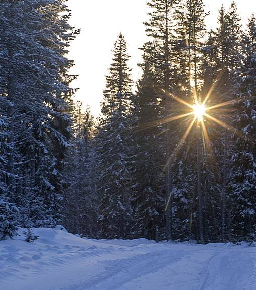 Фотообои Зимой в лесу (ID 15473)