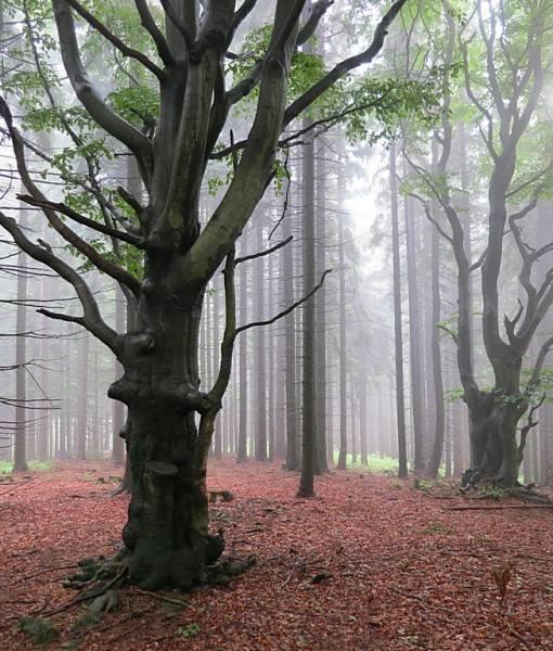 Фотообои Утренний туман (ID 15481)