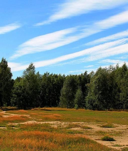 Фотообои У лесной опушки (ID 15482)