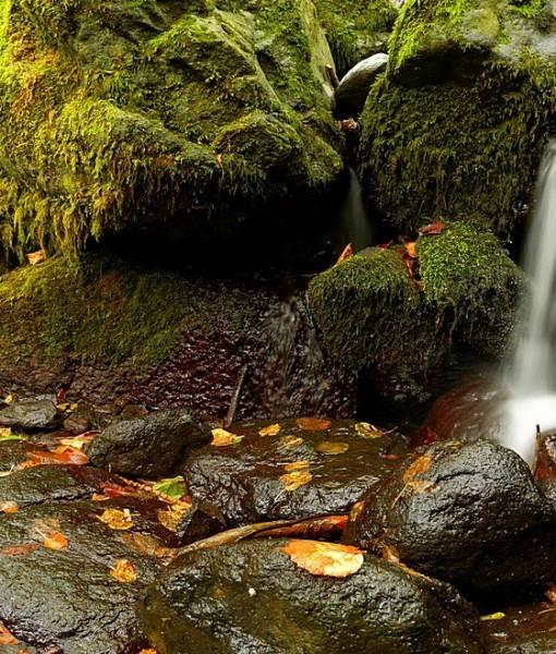 Фотообои Лесной ручей (ID 15494)