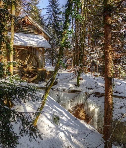 Фотообои В зимнем лесу (ID 15495)