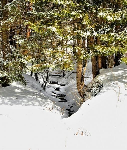 Фотообои Ручей в зимнем лесу (ID 15496)