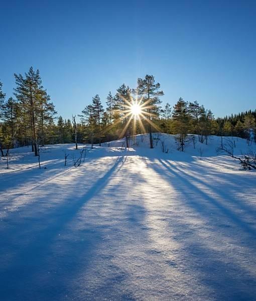 Фотообои Лучи зимнего солнца (ID 15498)
