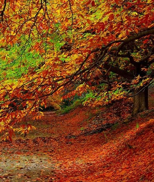 Фотообои Осенняя аллея (ID 15514)