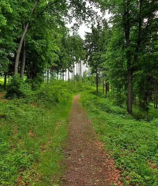 Фотообои Тропинка в лесу (ID 15516)