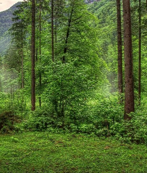 Фотообои В лесу (ID 15518)