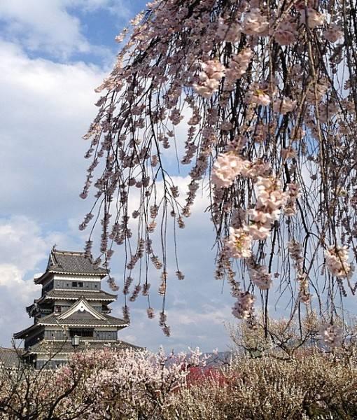 Фотообои Весеннее цветение (ID 16339)