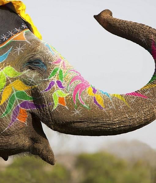 Фотообои Слон в национальной росписи (ID 16397)