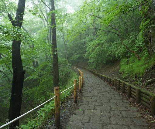 Фотообои Лес в тумане (ID 1049)