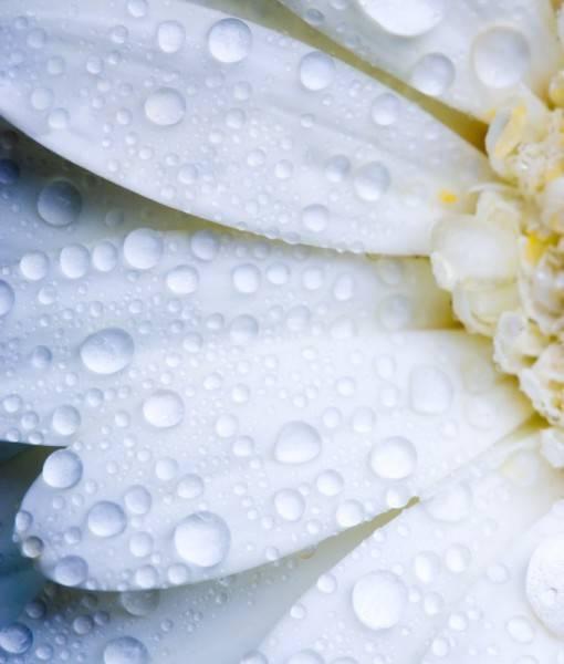 Фотообои Белый цветок (ID 1459)
