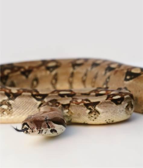 Фотообои Змея (ID 334)