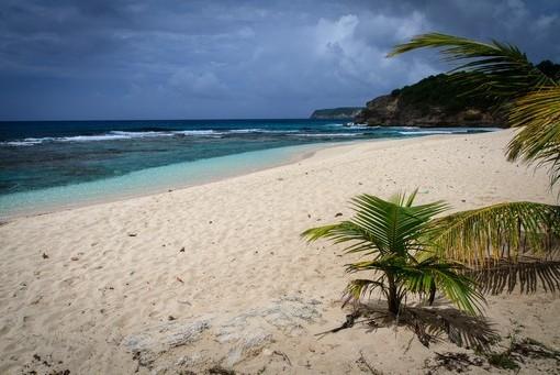 Фотообои Небольшая пальма на песке (ID 2960)